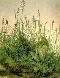 『芝』(1503年)